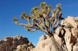 joshua_tree_natl_monument