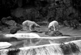 polar bear exhibit 2