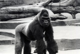 Historic Bronx Zoo