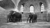 inside the renovated elephant house (Zoo Center)