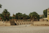 The avenue of Sphinxes (Luxor and Karnak)