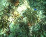 Sea Life 3-crop.jpg