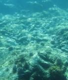 Sea Life 2-crop.jpg