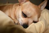 Sleepy little Mya
