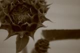 sunflowers 006.jpg