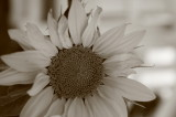 sunflowers 007.jpg