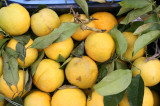 In Sorrento its all about the Lemons!