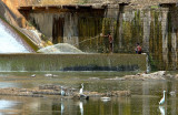 Fishing at the Dam