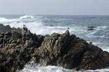 Pacific Grove/Asilomar 11
