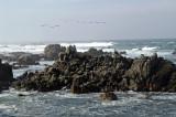 Pacific Grove/Asilomar 12