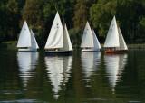 Cormorans en Seine