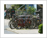 A Horde of Bicycles