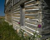 Barn & Thistle