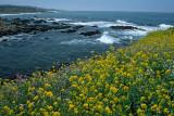 Coastal Springtime