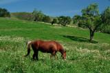 Spring Range