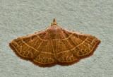 Corgatha dictaria