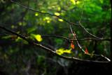 Nature Tangled