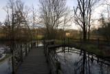 Winter Lotus Pond