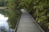Wooden Walkway Morning
