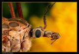 Flies (Crane)