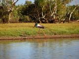 Jabiru, Northern Australia