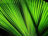 Leafy Green Rainforest Vegetation