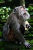 The monkey sings