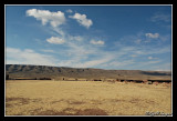 Routes de l'Altiplano