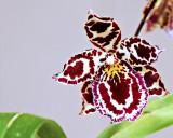 orchid 533.jpg