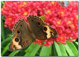 Butterflies & Moths In Nicaragua