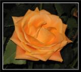 Favorite Flower Galleries