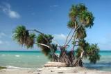Fanning Island 065