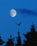 Moon from Roncalli 006**WINNER**