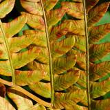 Fall Close-ups 022