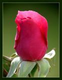 Rosebud 012 Frame