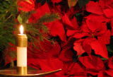 May the Light of Christmas Bring You Peace and Joy
