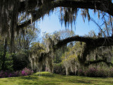 A View Through the Spanish Moss