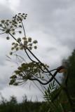 Vuonninen