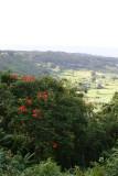 Waianapanapa - Landscape