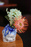 Road to Hana - Red Protea @ Charley's
