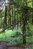 Road to Hana - Jungle