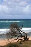 Road to Hana - Tree & Beach