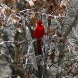 February 18th, 2007 - Cardinal 10472