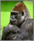 Big Ape gallery