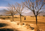 Three trees and a female pedestrian-FATA