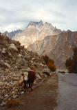 Cow in water ditch on roadside