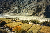 Fields by the River Indus