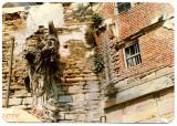 Varanasi- Wall & Roots