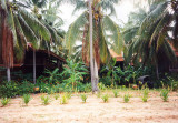 Chaweng Beach-backyard