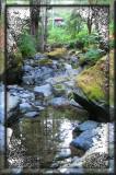 Dutch Bill Creek